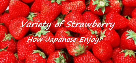 Variety of Strawberry -How Japanese Enjoy-