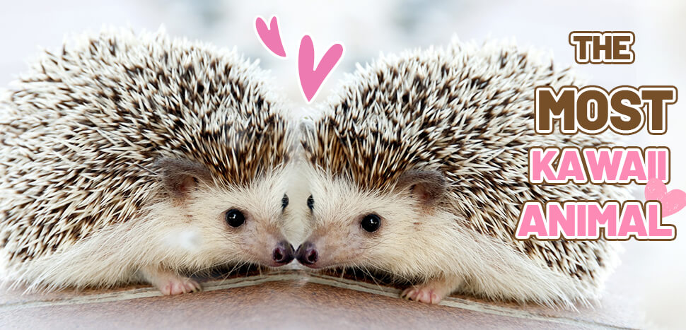 The Most Kawaii Animals