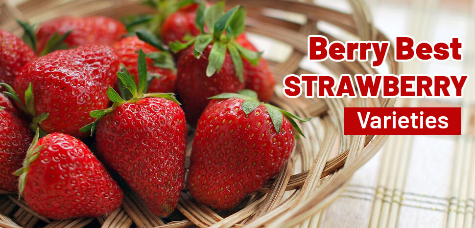 How to Enjoy Japanese Strawberries