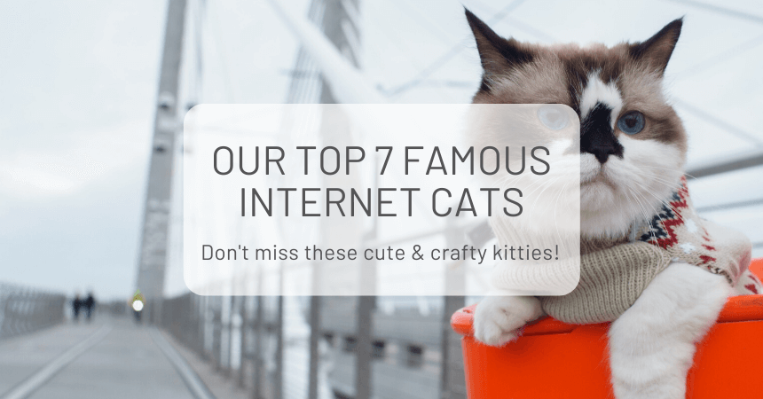 Our Top 7 Famous Internet Cats