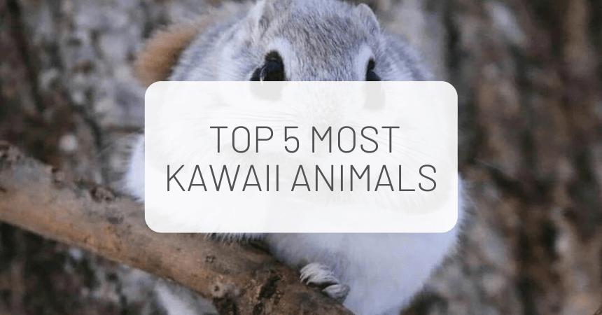 The Most Kawaii Animals