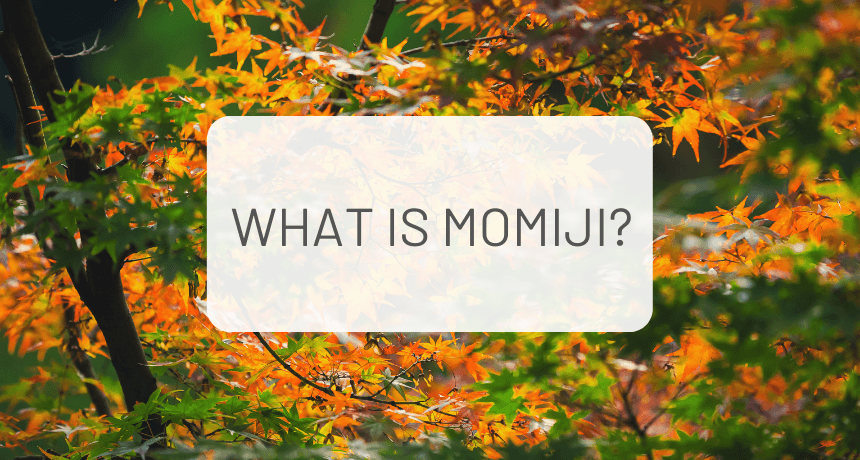 What is Momiji?
